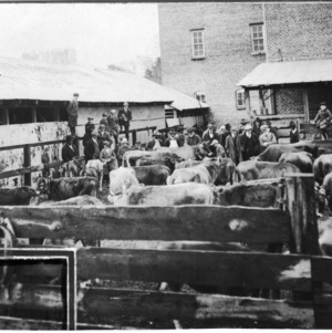 Men at cattle stockyard
