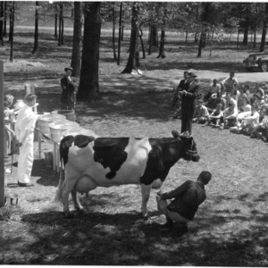 Milking demonstration