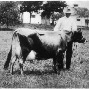 Man with dairy cow
