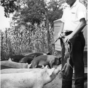 Jimmy Harris with piglets