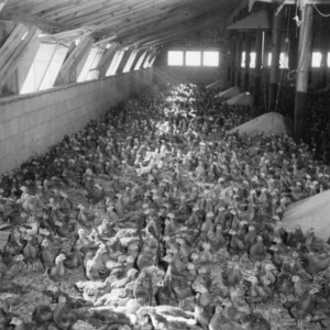 Interior of Broiler House