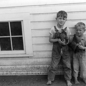 Barefoot boys holding chickens