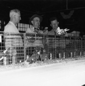 V. S. Caldwell, J. W. Carpenter, and Clifton F. Parrish viewing pigeon show at 1952 NC State Fair