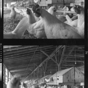 Inside the Poultry House