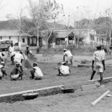 Poultry Extension Work in Nigeria, 1950's