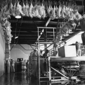 Birds unloaded from coops to line
