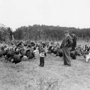 County agent Morrison with man and child observing turkeys