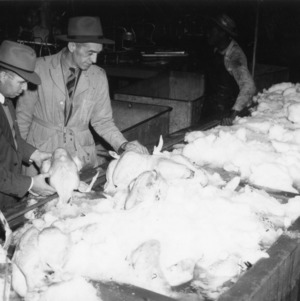 Men putting hens on ice at Siler City Dressing Plant