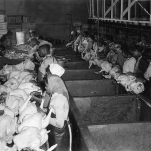 Workers packing turkeys at Siler City Dressing Plant