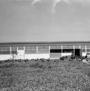 Turkey breeder house