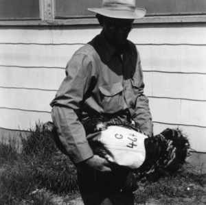 Mr. McConnell holding turkey breeder hen with numbered saddle
