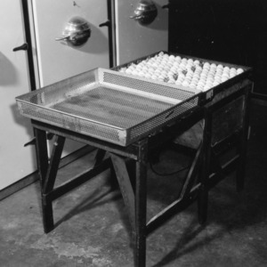 Egg trays during incubation