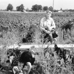 4-H Club member Hilton Brooks with turkeys in soybean field