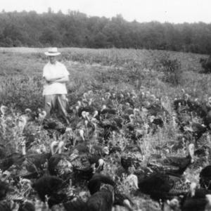 Fred Brown with turkey flock in soybean field