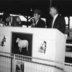 Announcing at sheep judging