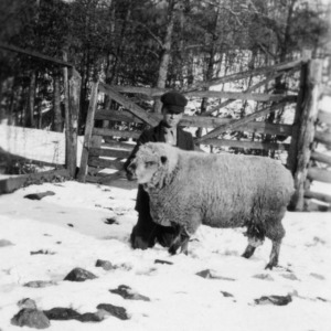 Bunyon Love with sheep in snow