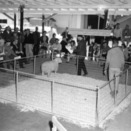 Sheep in pen at sale