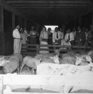 Group examining sheep