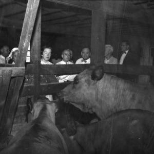 Group examining cows
