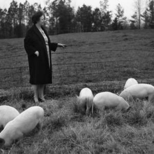 Woman standing in pen with swine