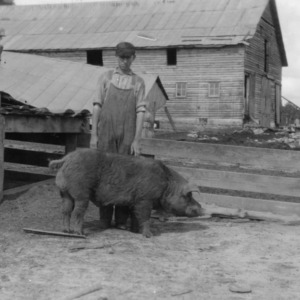Young man with swine on farm