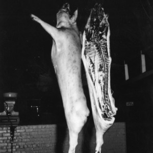Butchered Duroc pig, suspended