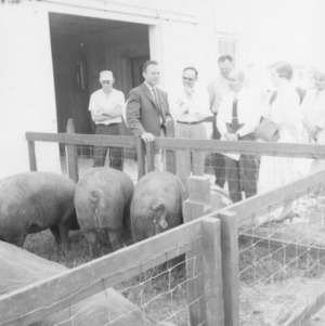 Group observing swine in pen