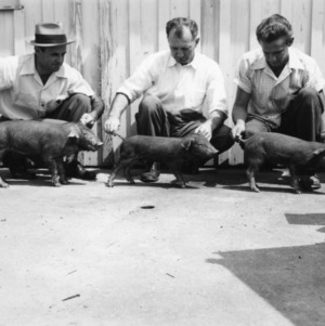 Three men holding three piglets from feeding experiment