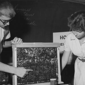Beehive demonstration during State 4-H Club Week
