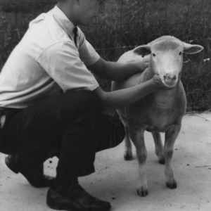 Livestock Judging during State 4-H Club Week