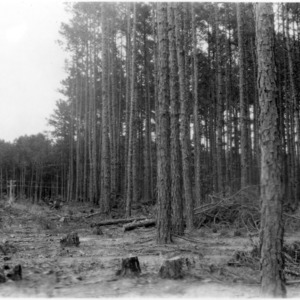 Forest Cutting Methods by College of Forest Resources