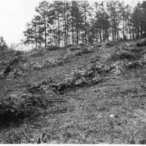 Cutting Methods of Shortleaf Pines