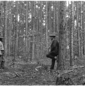 Selective Cutting Methods of Shortleaf Pines