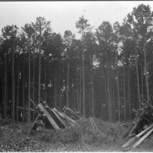 Cutting Methods of Pines
