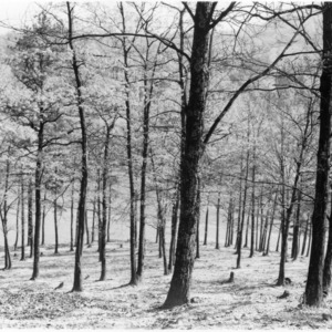 Forest erosion due to woodland grazing