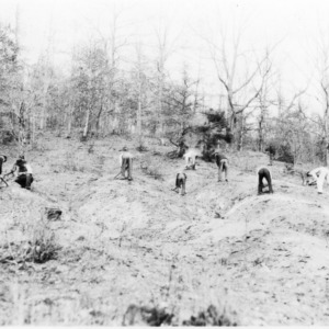 Erosion Reclamation with Shortleaf Pines