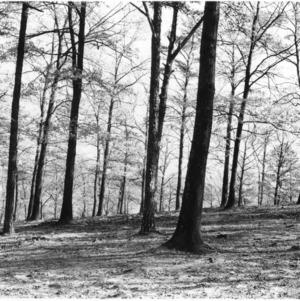Effect of Grazing Woodland