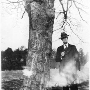 Large Dogwood Tree