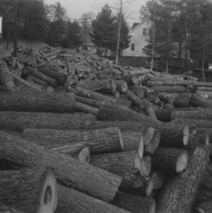 Hickory Timber Market