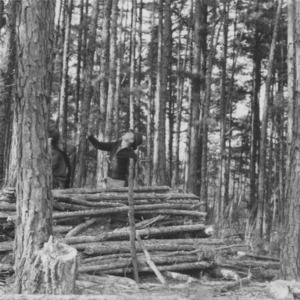 Donald and Richard Troxler of Alamance County thin their pines as a 4-H project