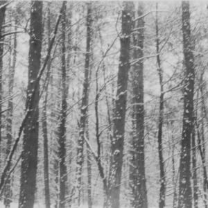 A snow scene in the forest on farm of Benton Thompson, Alamance County