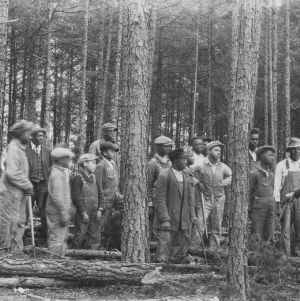 Farmers and agent J. W. Jeffries at lesson on making pine trees a farm crop