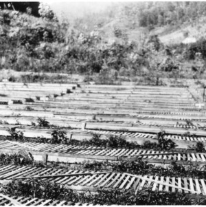 Forestry nursery, operated by the Log Cabin Association, Jackson County, N.C.