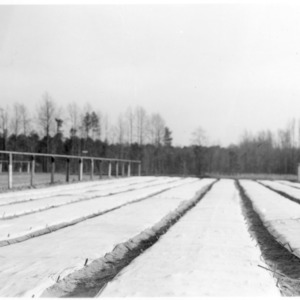 Canvas-covered seed beds of longleaf pine at State Forest Nursery, Clayton
