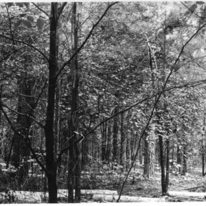 Pulp wood cut from a timber thinning demonstration on farm of J. Claude Barber, Rowan county