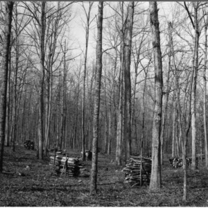 Timber stand improvement demonstration in hardwoods by Civilian Conservation Corps, Rockingham Coutny, N.C.