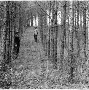 Two men standing in a forest