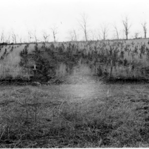 Badly eroded hillside on farm of A.F. Padgett