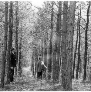 Trees at the farm of Marvin W. Smith