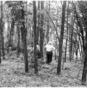Black locust forest near Piney Creek, Alleghany County